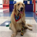 Journey was born without a front left paw, and his prosthetic is a conversation piece when he visits patients with his owner, Ron Graff. (Photo courtesy of St. Joseph's Hospital-North)