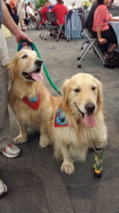 Jason, left, and Journey are two of the volunteer therapy dogs at St. Joseph's Hospital-North. The program, which began last July, now has six dogs visiting patients during the week. (Courtesy of St. Joseph's Hospital-North)