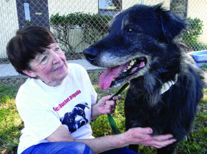 Pat Mulieri spends some time with Rocket, one of the dogs rescued by Pasco County Animal Services. Mulieri will be honored with her own window room at the shelter Dec. 20. (File photo)