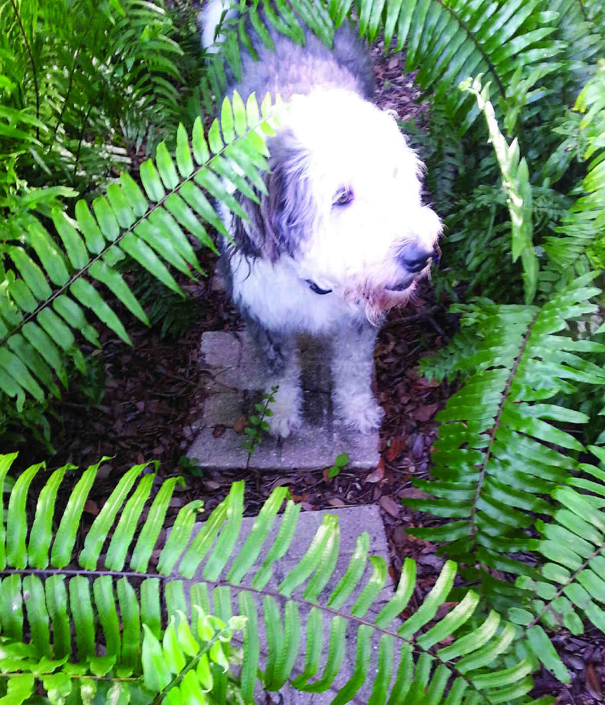 my pet friendly yard is a favorite place for my dog pepper pinson - My Pet Garden