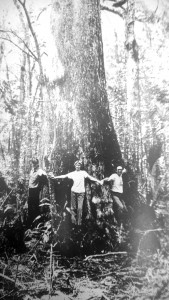 The Ehren Cypress Tree was photographed on Aug. 27, 1989, on property owned by the Southwest Florida Water Management District, near Ehren Cutoff Road.  Jack Vogel, Patsy Herrmann and Eddie Herrmann, all of San Antonio, are standing with outstretched arms, leaning against the tree's estimated circumference of 27 feet.  The tree was spared from being cut down decades before because it had a split in its trunk. Courtesy of Eddie Herrmann