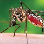 Zika virus cases keep growing