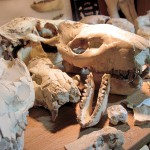 Local couple shares passion for fossils