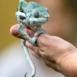 A lively lesson on reptiles