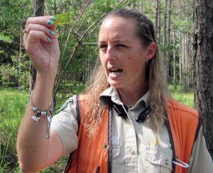 Pasco County Forester Mona Neville uses a prism to help gauge the number of trees in an acre of pine forest.