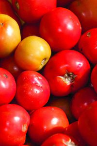 Growing Healthy Tomatoes In Central Florida Is As Easy Choosing The Right Plant And