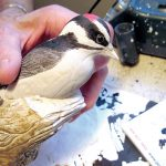 'Freeing' birds from blocks of wood