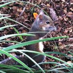Squirrels are everywhere…