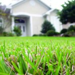 Keep your lawn healthy during winter and fall